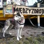 Nasze podróże: Psia plaża w Międzyzdrojach