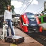 Strachy na lachy – czyli jak nauczyć psa podróżowania