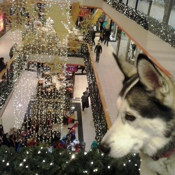 Szczecińska Kaskada. Tu można wejść z psem.