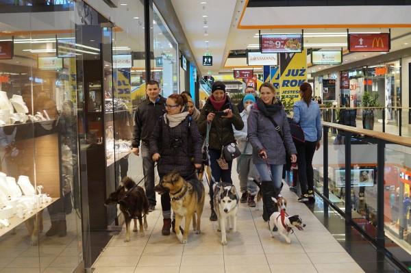 Psy w szczecińskiej Galerii Kaskada.