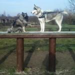 Wybiegi dla psów? Jak najwięcej!