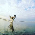 TOP PIĘĆ polskich psich plaż i jedna w bonusie (DUŻO ZDJĘĆ)