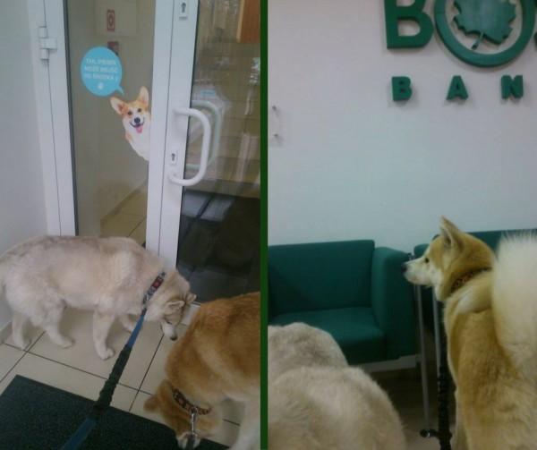 pies w banku