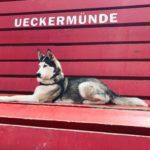 Pomysł na spacer, czyli Ueckermünde z psem
