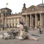 Nasze podróże: PIES W BERLINIE