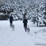 Nasze podróże: DOG ORIENT CZYLI EKSTREMALNY SPACER Z PSEM
