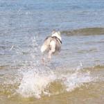 AKTUALNOŚCI: Gdynia ma drugą psią plażę!