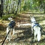 Bieganie z psem – jak to się robi