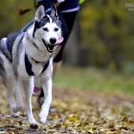 SPORTOWO: Canicross i moja psiówka wyścigówka