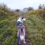 Bieganie z psem – jak trenujemy