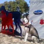 Psi park po wilanowsku