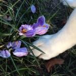 Psie okruszki (2)