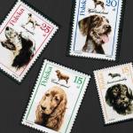 Czy pies może wejść na pocztę?