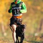 ROZMOWA: Canicross – jak powienien trenować pies