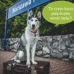 Koniec interREGIO. Fatalna wiadomość dla psiarzy