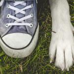 KONKURS – zabieram psa na majówkę!
