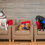 Pies w pracy – hit czy kit? (KONKURS)