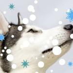 ŚWIĄTECZNE INSPIRACJE: 10 prezentów dla psiarza