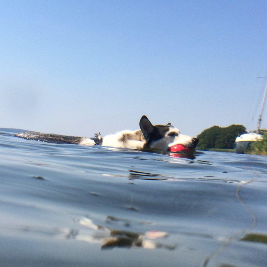Czy pies może się utopić