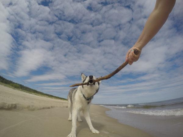 Psia plaża Międzyzdroje