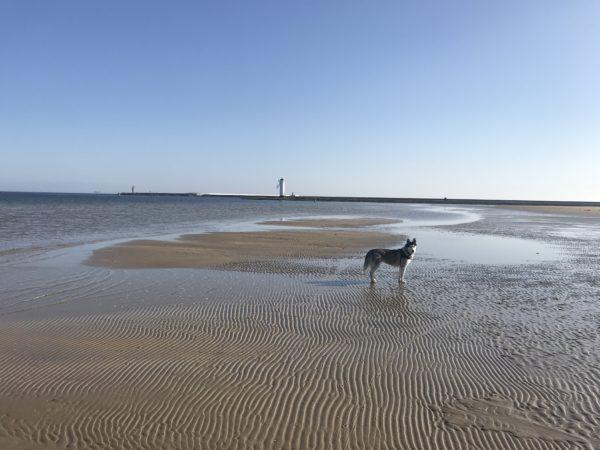 Psia plaża w Świnoujściu