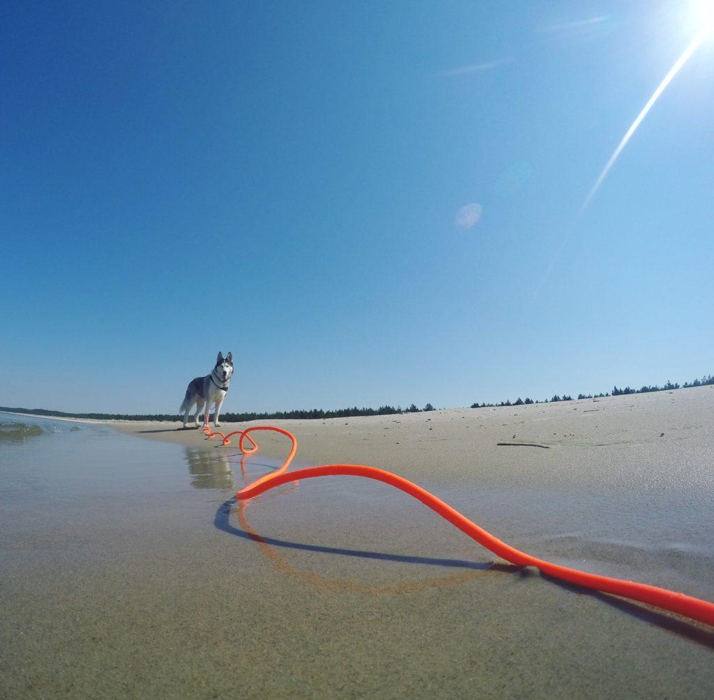 Linka Hunter. Psia plaża Międzyzdroje.