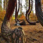 Krzywy Las, czyli bajkowy spacer z psem