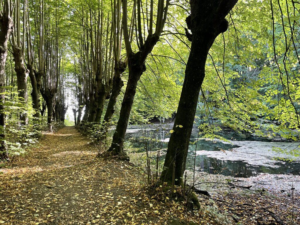 Dolina Elfów, Lasy Oliwskie